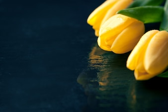 Yellow tulips on a black background