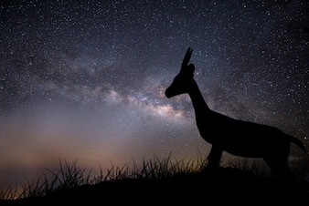 Young deer silhouette in wild at night with milky way in the sky.