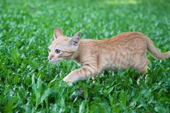 緑の庭で歩く若い子猫、晴れた日に撮影
