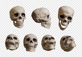 Realistic skull collection
