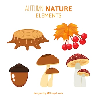 Acorn with other elements of the forest