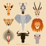 African animals collection