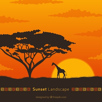 African landscape background at sunset with giraffe