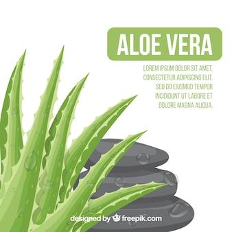 Aloe vera background with stones