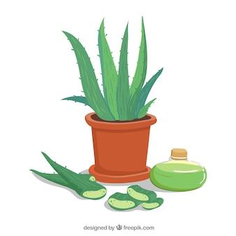 Aloe vera pot background