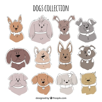 Assortment of cute dogs