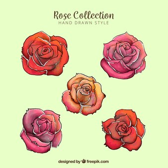 Assortment of five colored roses in hand-drawn style