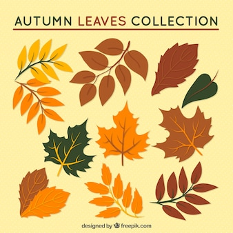 Assortment of hand-drawn autumn leaves