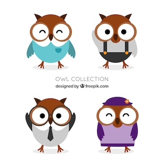 Assortment of owls with clothes in flat design