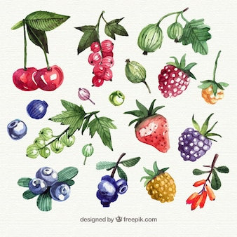 Assortment of watercolor pieces of fruit