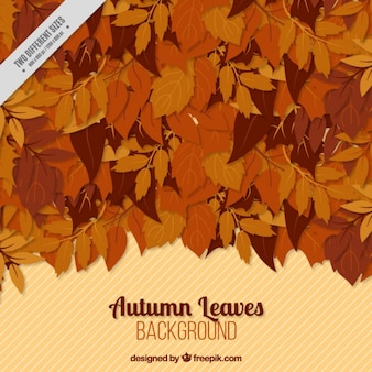 Autumn background of dry leaves