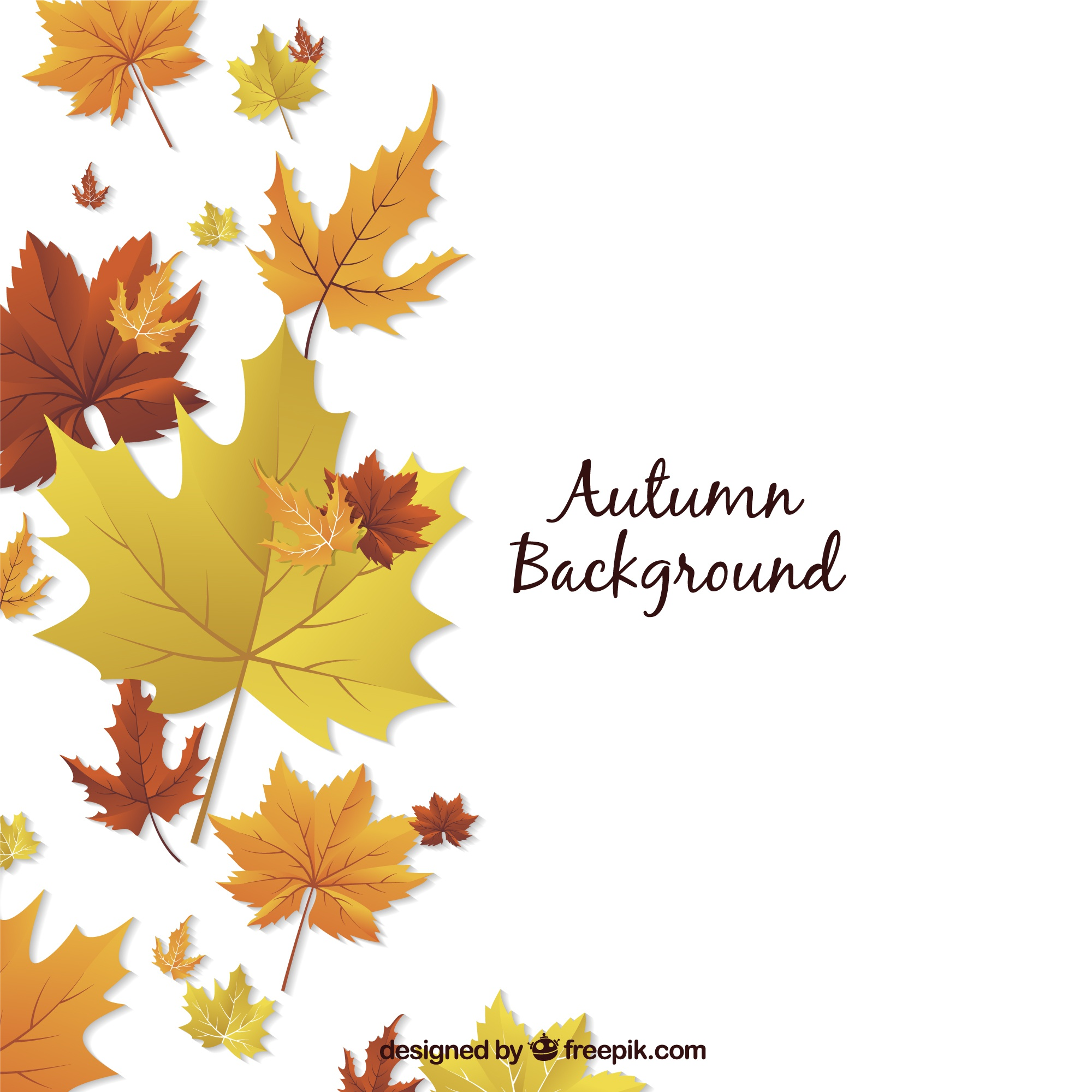 Autumn background with decorative dried flowers