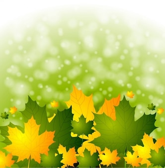 Autumn leaves with green bokeh background