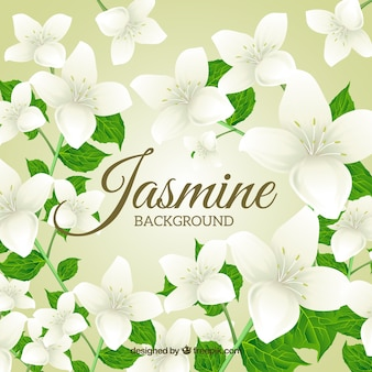 Background of beautiful jasmine with leaves