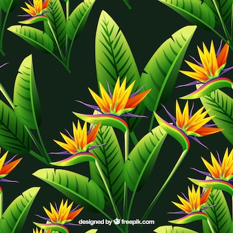 Background of flowers and tropical leaves