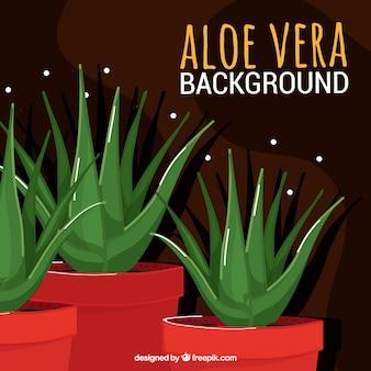 Background of pretty pots of aloe vera