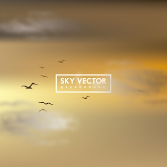 Background with sunset sky and birds