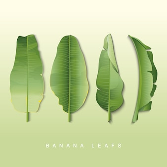 Banana leafs collection background