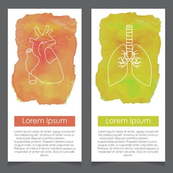 Banners about human anatomy, heart and lung