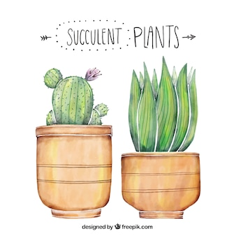 Beautiful plants painted with watercolor