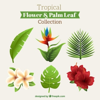 Beautiful tropical flowers and leaves