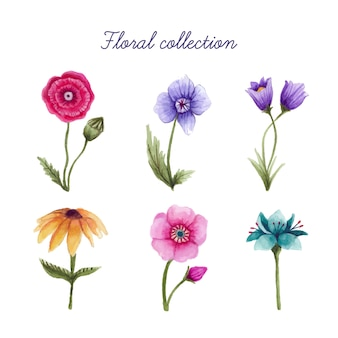 Beautiful watercolor floral elements