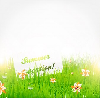 Beauty landscape field summer scene
