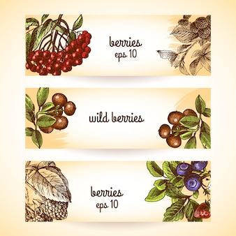 Berries banners collection