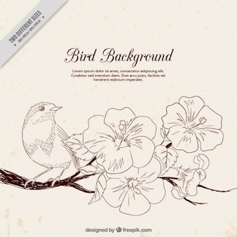 Bird background with blooming branch