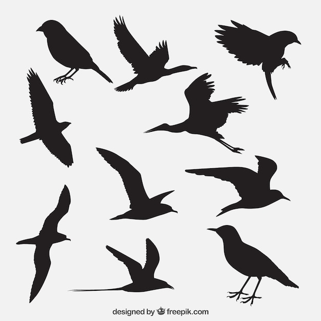 Bird Outline Vectors Photos and PSD files Free Download