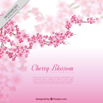 Blurred background with branch and cherry blossoms