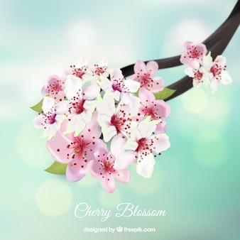 Blurred bokeh background with cherry blossom branch