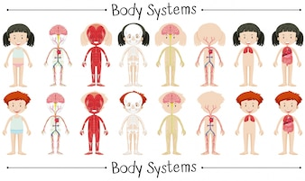 Body system of boy and girl illustration