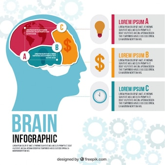 Brain infographic template with three phases