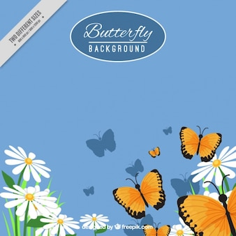 Butterflies with daisies background
