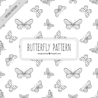 Butterfly sketching pattern