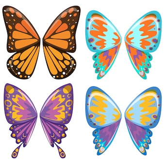 Butterfly wings collection