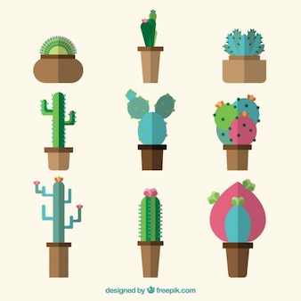 Cactus collection in flat design style