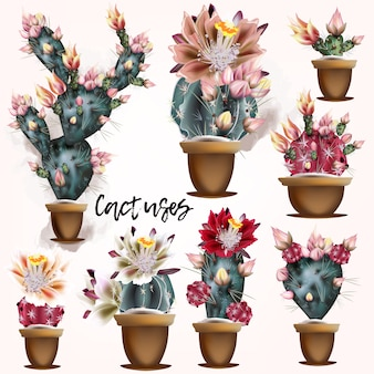 Cactus designs collection