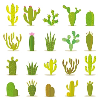 Cactus icon collection