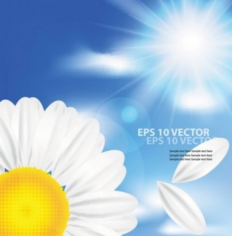 Camomile and sun vector