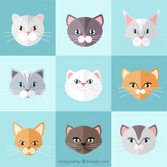 Cat breed flat collection