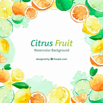 Citrus fruits watercolour background