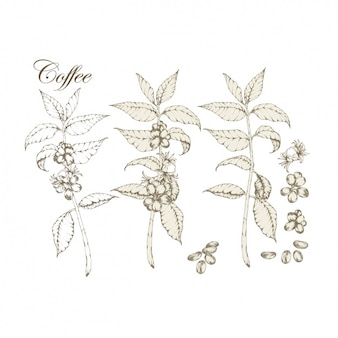 Coffee plants collection