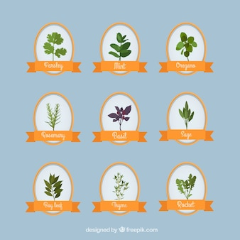 Collection of aromatic herbs
