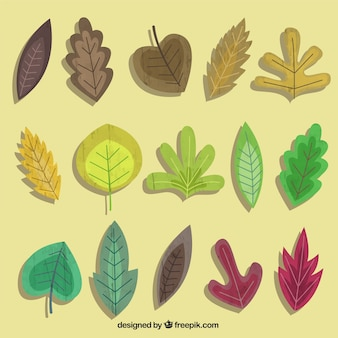 Collection of autumnal leaves