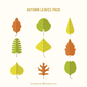 Collection of colored leaves