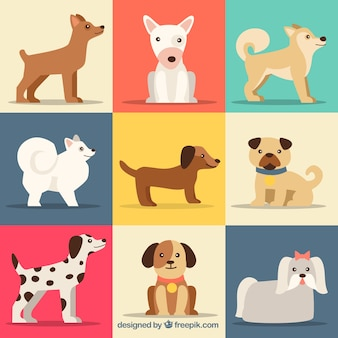 Collection of cute dog breeds