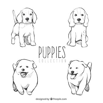 Collection of cute puppies
