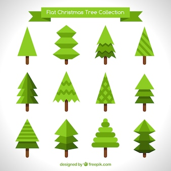 Collection of different pines in flat design